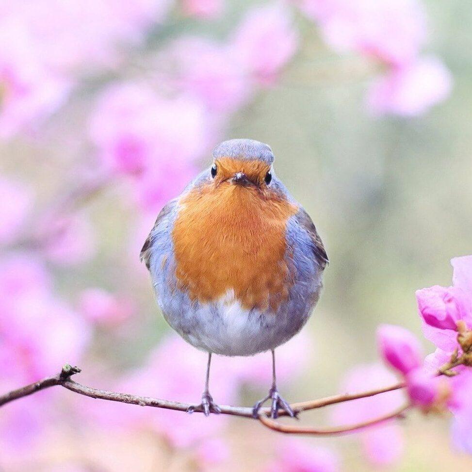 spring-bird-2295436_1920